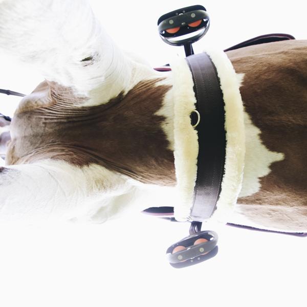 Kentucky Horsewear aitādas vēderjosta